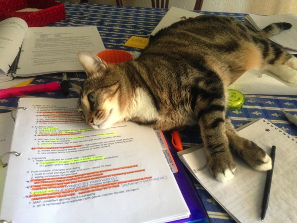 missy studying