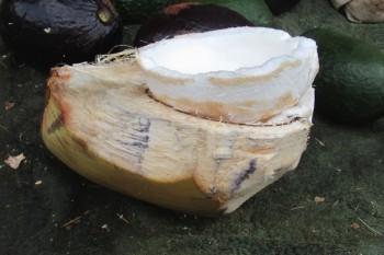 coconut-meat.JPG