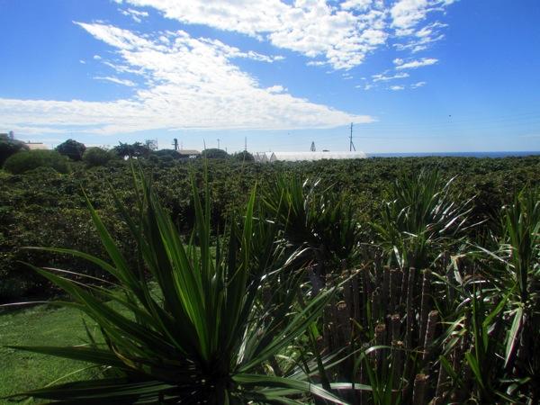 farm-view_1.JPG