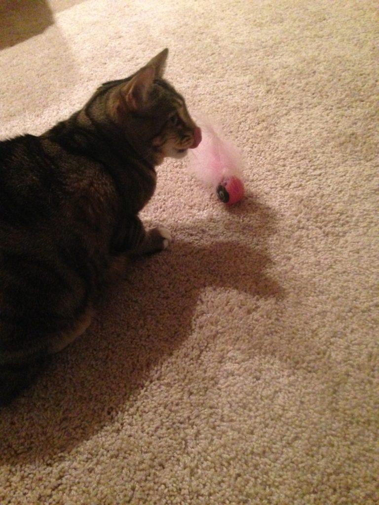 missy pink toy