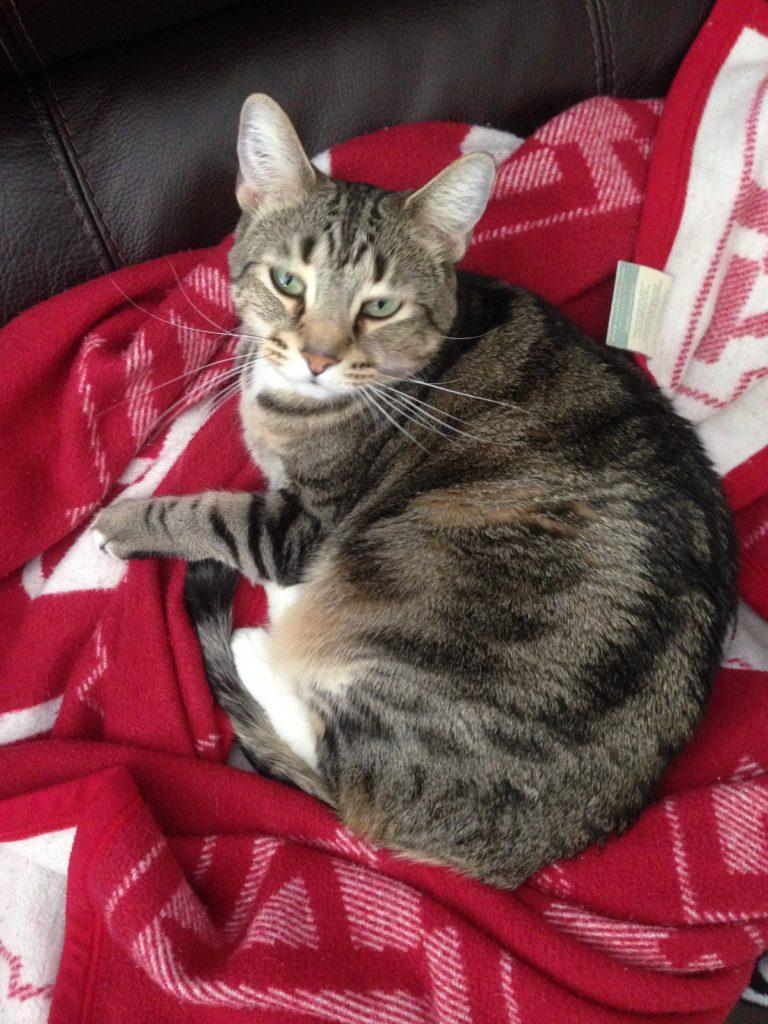 missy-blanket