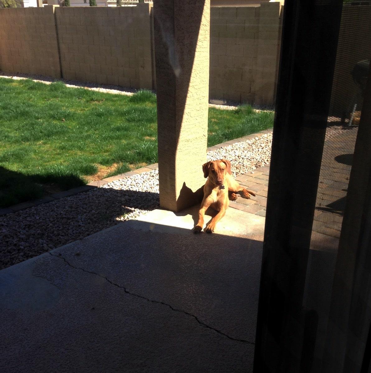 6 nala outside patio