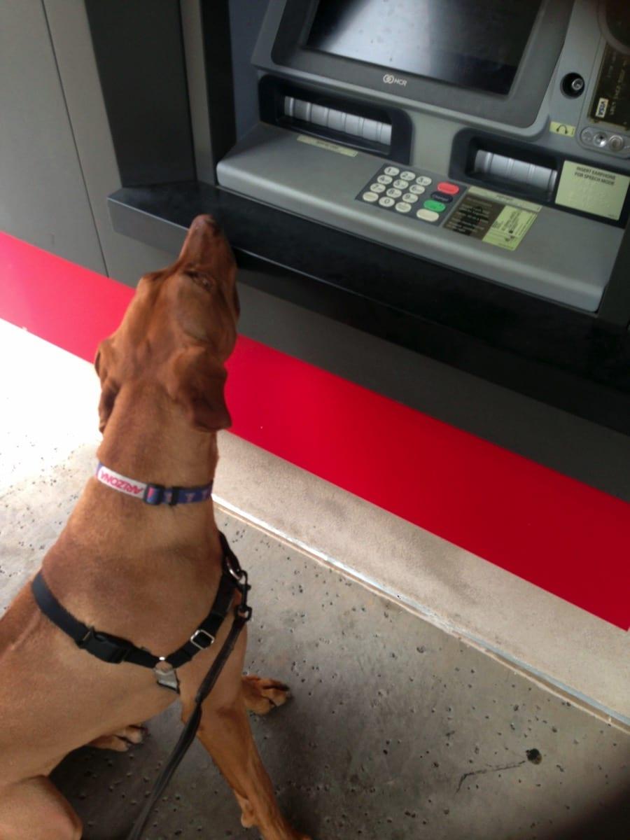 Nala and ATM