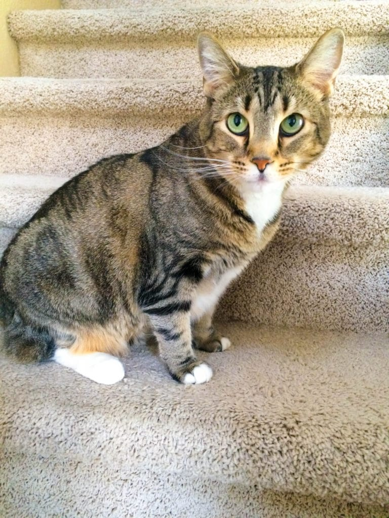 kitty on stairs