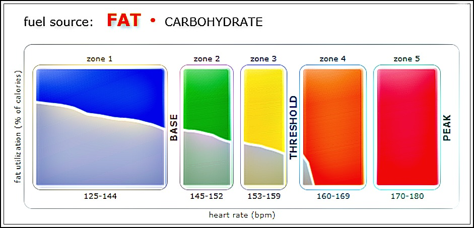 active-metabolic-assessment