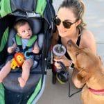walk with bob stroller 8 month baby Rhodesian ridgeback