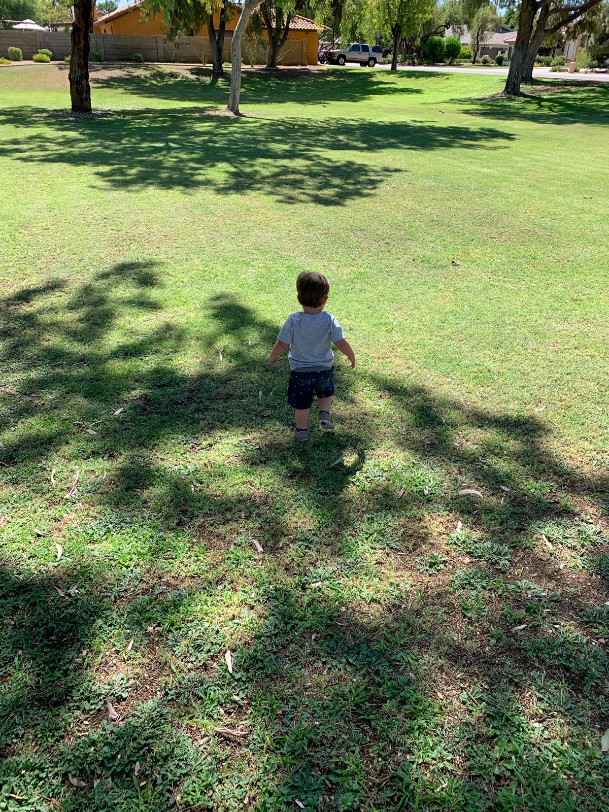 toddler in big green field