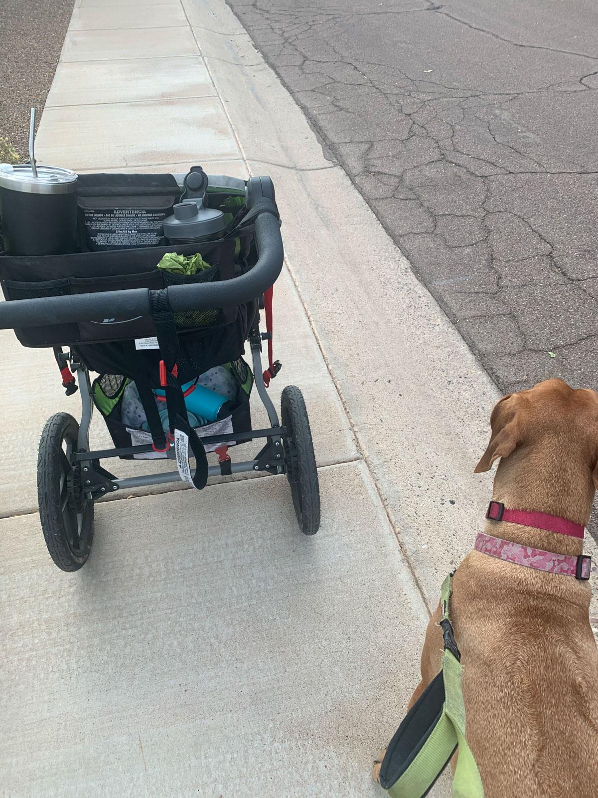 dog and stroller